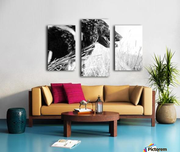 Wild days Canvas print