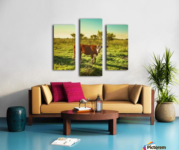 Cow in the Field Watching the Camera Canvas print
