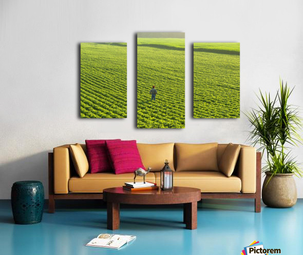 Portrait of a farmer walking through a large green soybean field in central Iowa in summer; Iowa, United States of America Canvas print