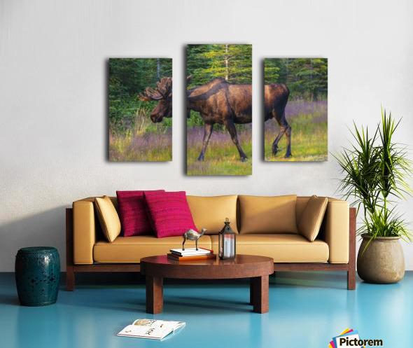 Bull moose in velvet, Kincaid Park, Anchorage, Southcentra Alaska, summer Canvas print