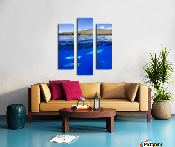 A split view of spinner dolphin (Stenella longirostris) below water and the island of Lanai above; Hawaii, United States of America Canvas print