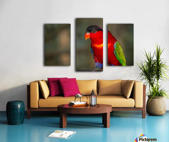 Nature and Birds  11 Canvas print