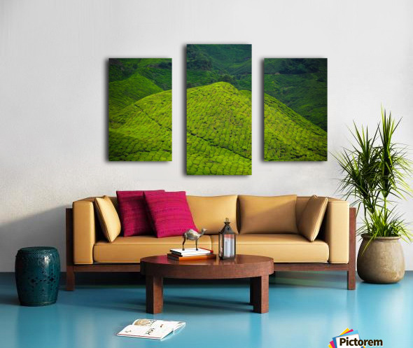 Tea plantations Canvas print