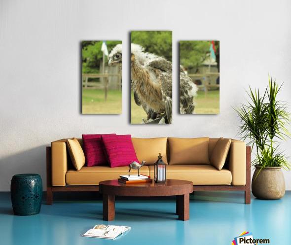 baby hawk1 Canvas print