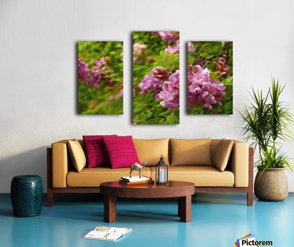 Rose Acacia Blossoms Canvas print