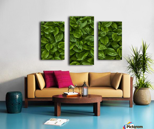 Hosta Canvas print