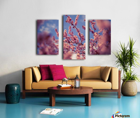 Spring cherry flowers Canvas print