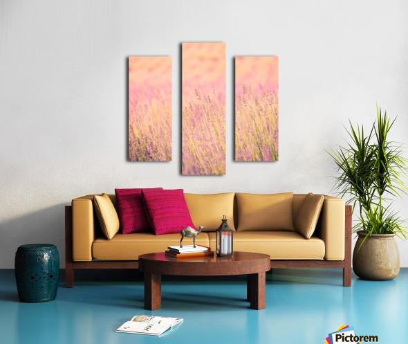 Sunset lavender flowers, instagram effect Canvas print