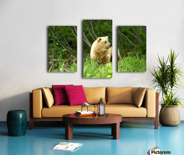 Two Year Old Grizzly Canvas print