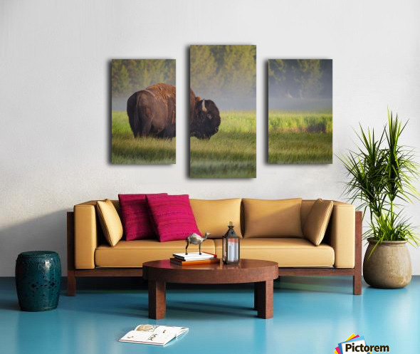 Bison in Morning Light Canvas print