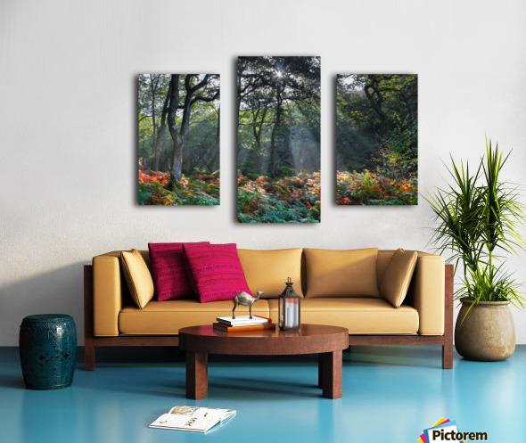 Dewerstone Woods Canvas print