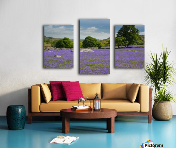 Emsworthy bluebells Canvas print