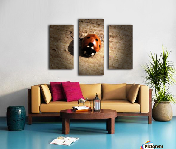 Lady Bird Bug Canvas print