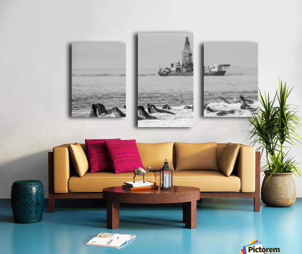 Seals by Oil Drill  Canvas print