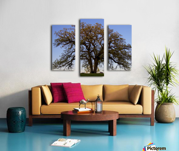 The Wishing Tree Canvas print