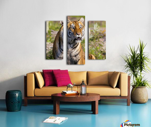 Tiger Watching Canvas print