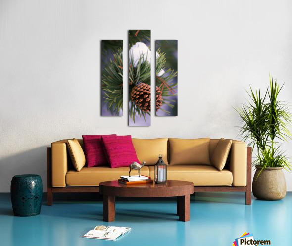 Early Snow On Pine Tree Branch With Pinecone Canvas print