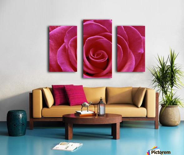 Rose Blossom Canvas print