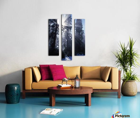Sunbeams Through Pine Trees Canvas print