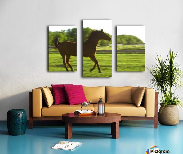 Horse Galloping Canvas print