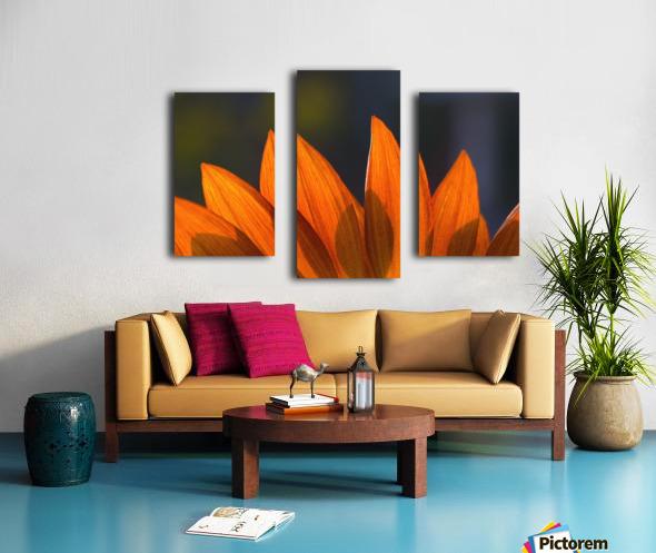 Sunflower Close-Up Canvas print
