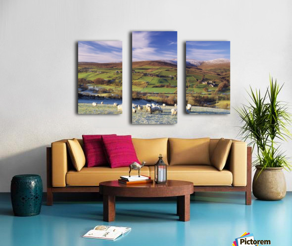 Sperrin Mountains, County Tyrone, Ireland, Sheep Canvas print