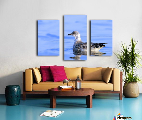 Young Gull Swimming Canvas print