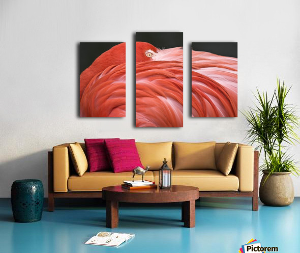 Close Up Of A Flamingo Resting Its Head On Its Back Canvas print