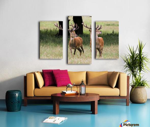 Elk In The Wild Canvas print
