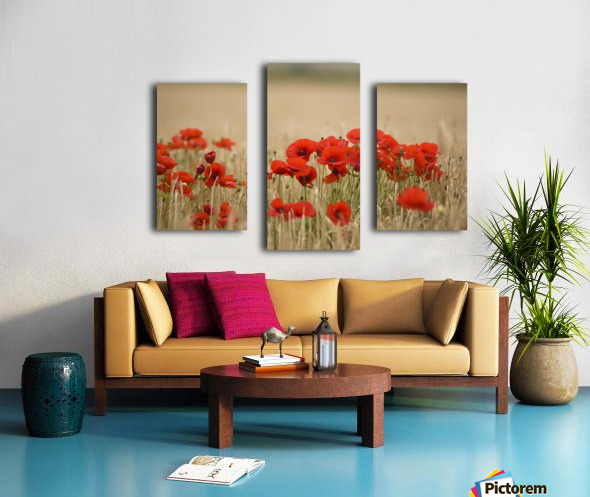 Poppies Growing Wild Canvas print