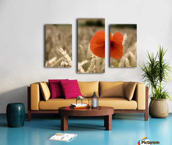 Red Flower In Field Canvas print