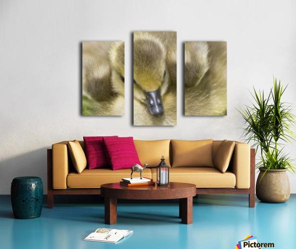 Fuzzy Gosling Canvas print