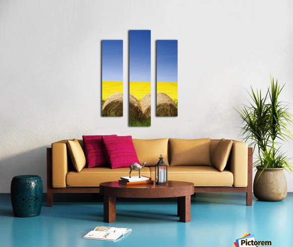 Hay Bales And Canola Field, North Yorkshire, England Canvas print