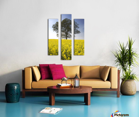 Tree In A Rapeseed Field, Yorkshire, England Canvas print