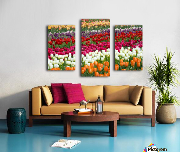 A Tulip Field Canvas print