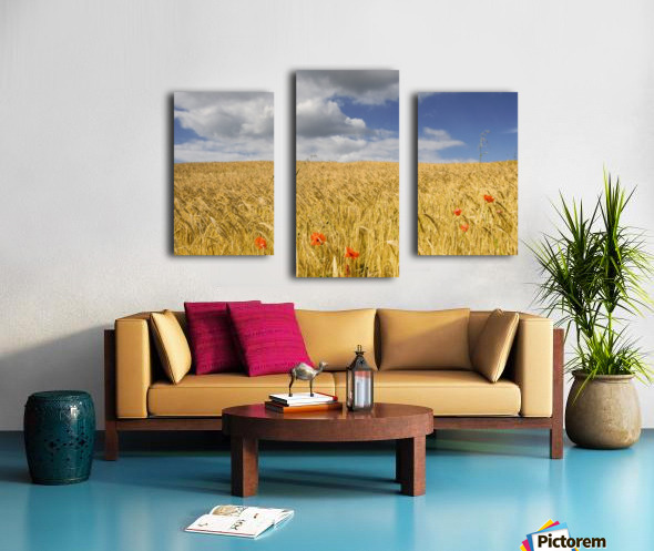 Wild Poppies In Wheat Field, North Yorkshire, England Canvas print