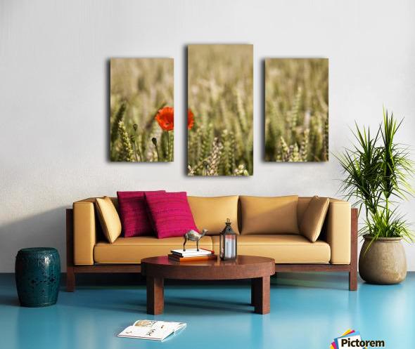 Poppy Flower In Field Of Wheat Canvas print