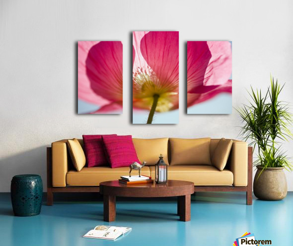 Pink Shirley Poppy Canvas print