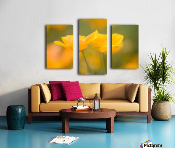 Yellow Poppy Flower, Mount Hood, Oregon, Usa Canvas print