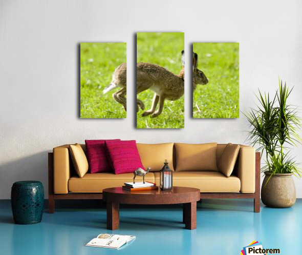 Hare Hopping In The Grass Canvas print