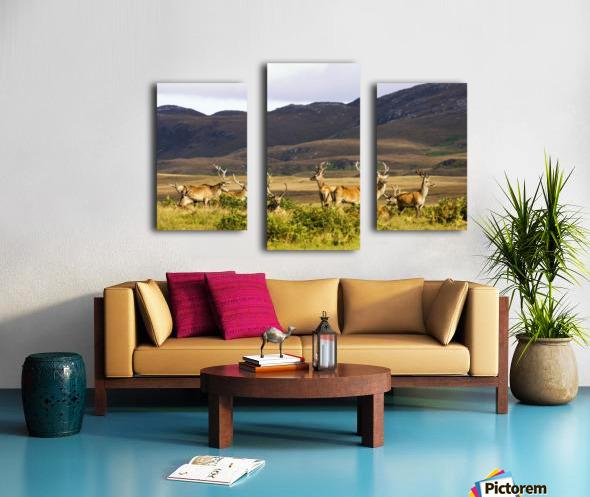 Island Of Islay, Scotland; Male Deer Roaming The Hills Canvas print