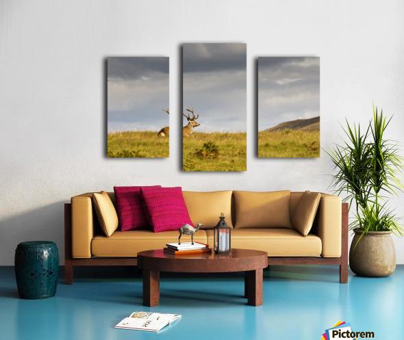 Island Of Islay, Scotland; Buck Resting On A Hill Canvas print