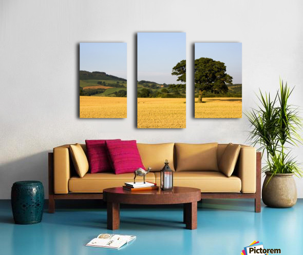 Tree In A Golden Field Of Grain, North Yorkshire, England Canvas print