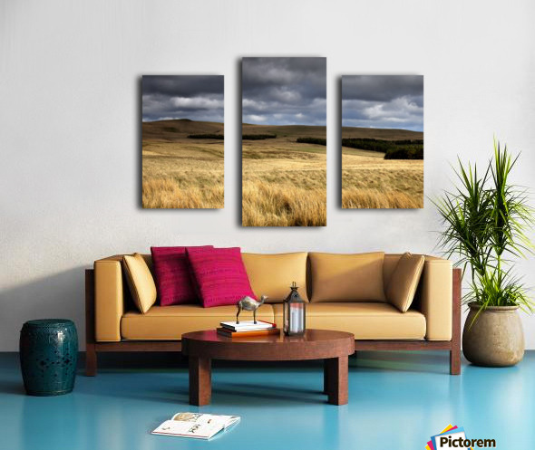 Field Of Wheat With Dark Clouds Overhead, Northumberland, England Canvas print