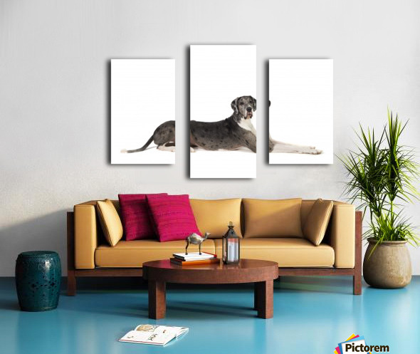 Great Dane Dog Canvas print