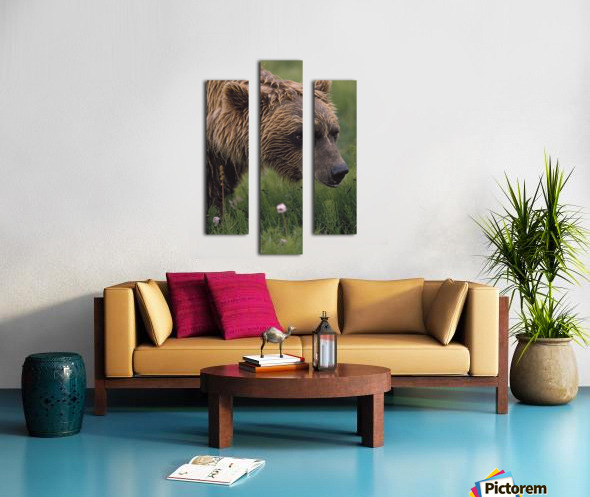 Grizzly Bear Wet From Rain Canvas print