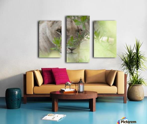 Lioness, Kenya, Africa Canvas print