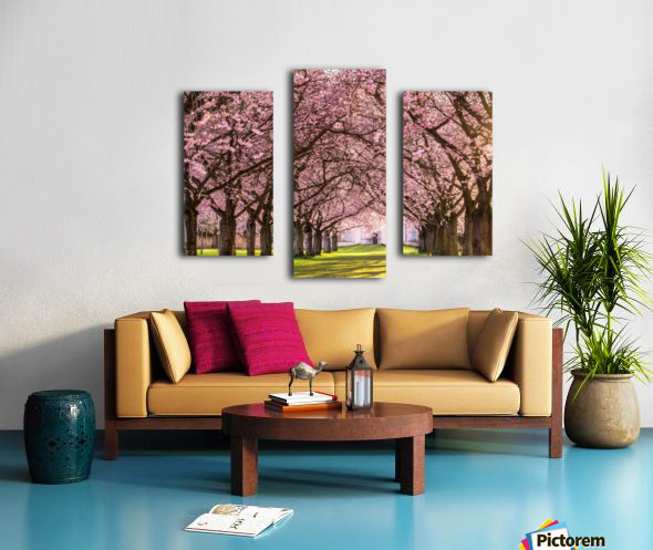 Cherry Blossom in a Park Canvas print