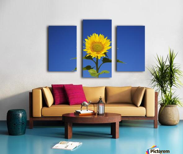 Laval, Quebec, Canada; Sunflower (Helianthus Annuus) Against A Blue Sky Canvas print