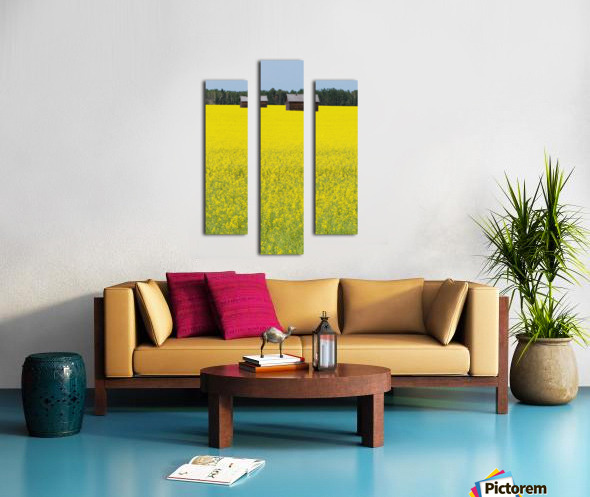 Alberta, Canada; Two Wooden Shacks In A Canola Field Canvas print